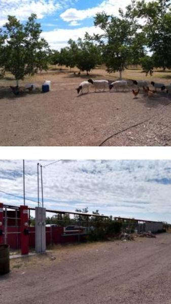 Foto Quinta en Venta en  Ocampo O Torreón,  Chihuahua  GRANJA NOGALERA EN VENTA COLONIA OCAMPO