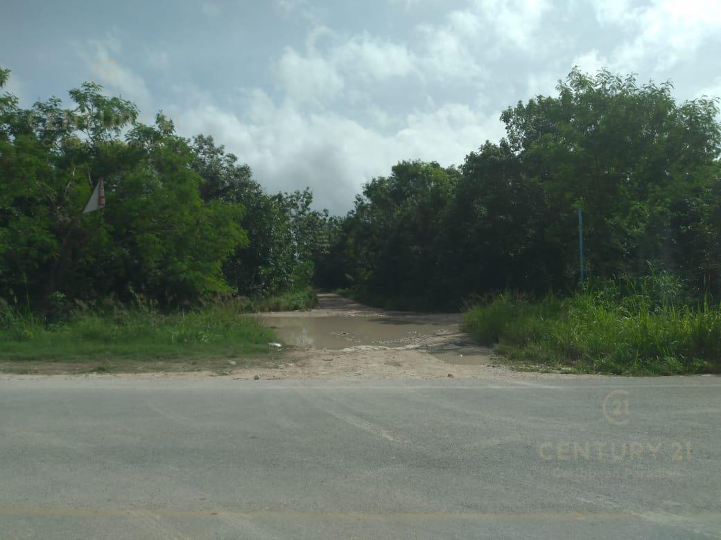 Alamos II Land for Sale scene image 3