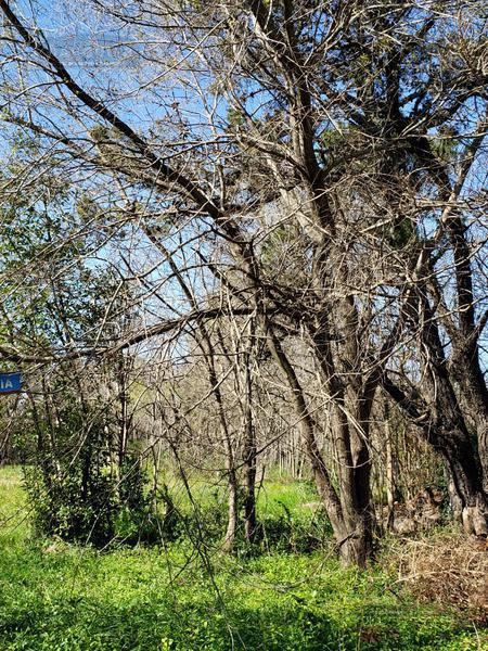 Foto Terreno en Venta en  Parque Las Naciones,  Guernica  SUIZA