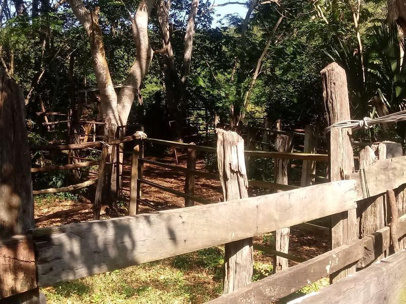 Foto Quinta en Venta en  Sotuta ,  Yucatán  Rancho en venta al Norte de Yucatán 935 Hectáreas, cerca de Sotuta