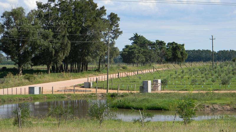 Foto Chacra en Venta en  Garzon,  Maldonado  Ruta 9 km 161 y Camino Sainz Martinez