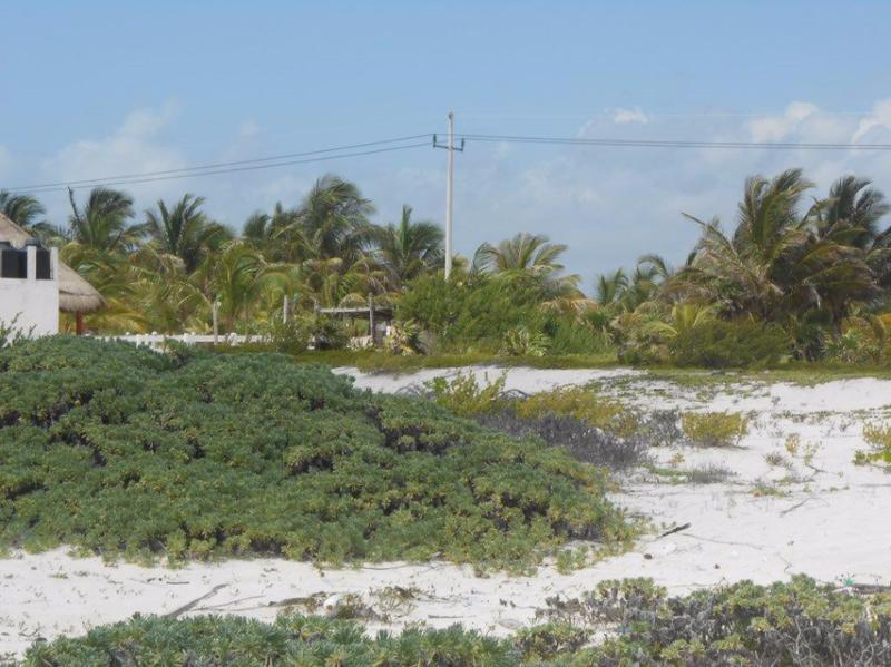 Mahahual Land for Sale scene image 12