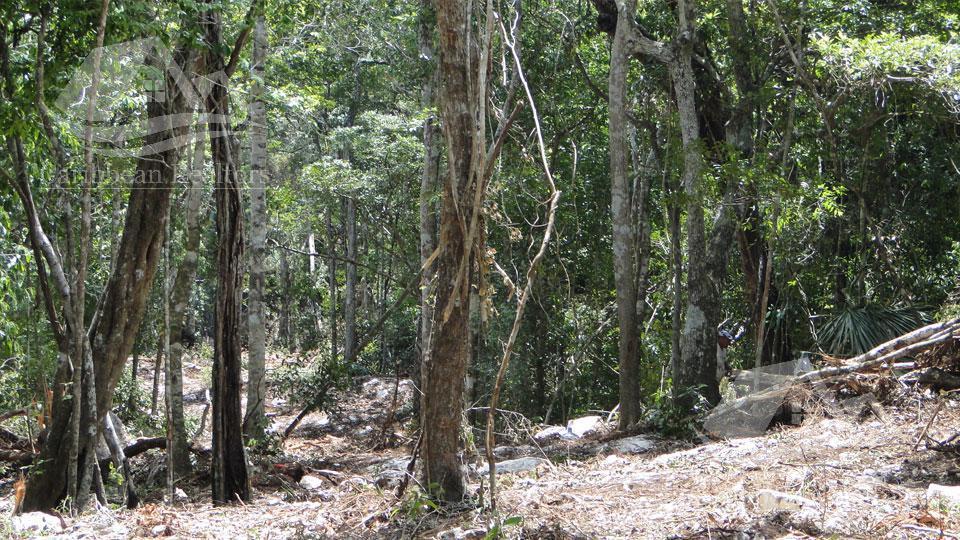 Foto Terreno en Venta en  Tulum ,  Quintana Roo  TERRENOS EN VENTA EN TULUM