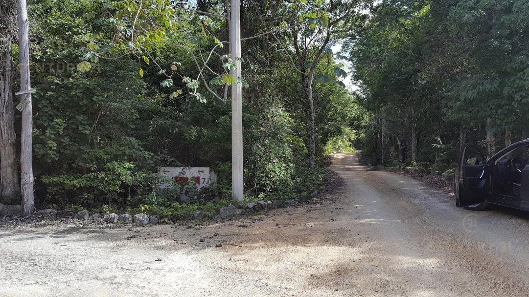 Tulum Land for Sale scene image 15