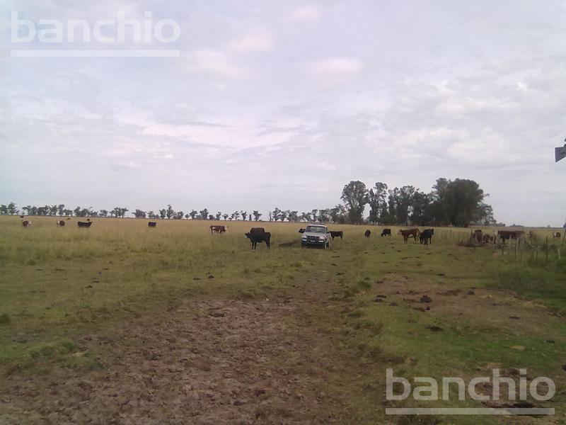 300 HA MIXTAS PEYRANO, Peyrano, Santa Fe. Venta de División campos - Banchio Propiedades. Inmobiliaria en Rosario