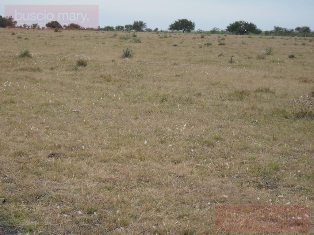 Foto Campo en Venta en  Cardona ,  Soriano  Cardona