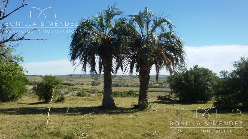 Foto Campo en Venta en  Pan de Azúcar ,  Maldonado  Paraje Repecho Ruta 9