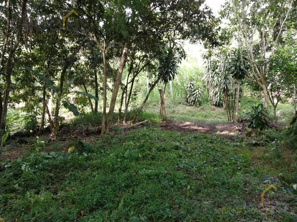 Foto Terreno en Venta en  Teocelo ,  Veracruz  Venta de terreno rústico en Monte Blanco, Municipio de Teocelo