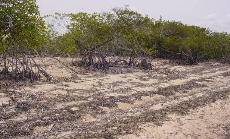 Foto Terreno en Venta en  Isla Mujeres Centro,  Isla Mujeres  Terreno en Cancún / Isla Mujeres zona continental