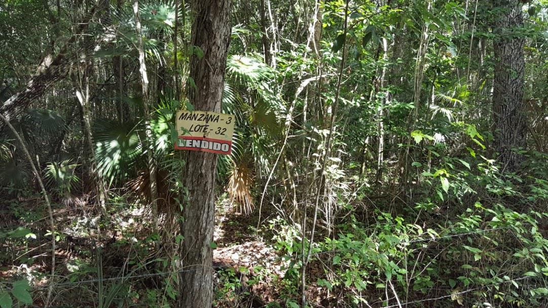 Tulum Land for Sale scene image 8