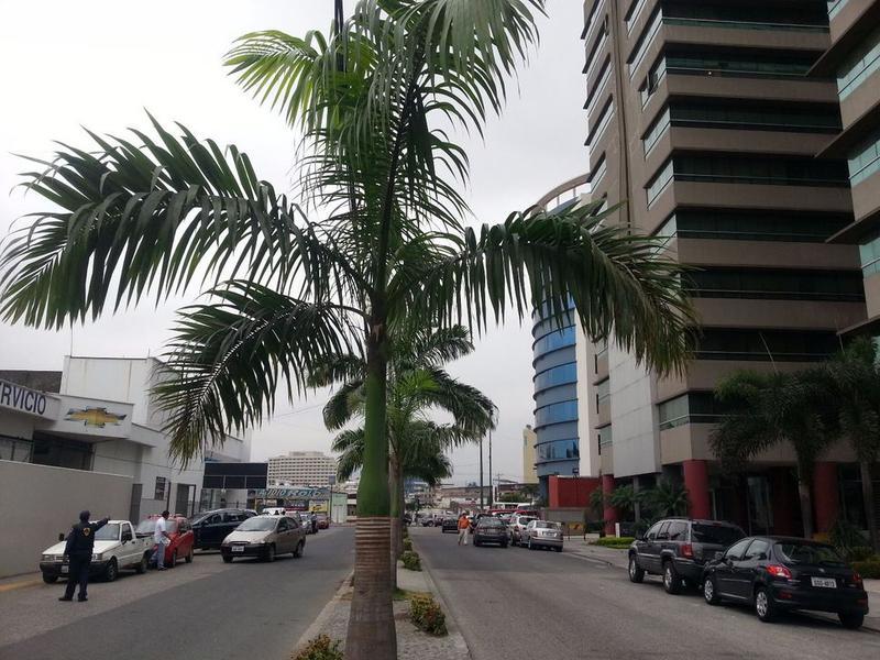 Foto Departamento en Venta en  Norte de Guayaquil,  Guayaquil  VENTA DE EXCLUSIVO DEPARTAMENTO CIUDAD DEL SOL