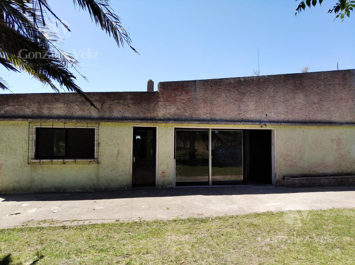 Foto Chacra en Alquiler en  Carmelo ,  Colonia  Chacra leandro Gomez pasando Av. Paraguay