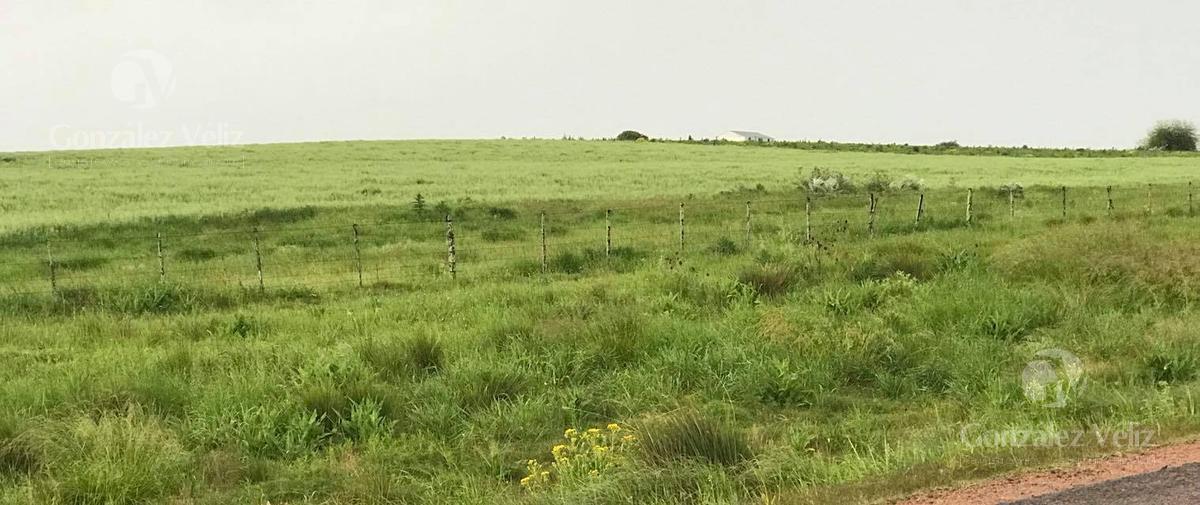 Foto Campo en Venta en  Carmelo ,  Colonia  Ruta 55, Kilómetro 40