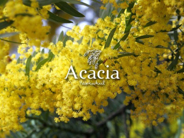 Foto Terreno en Venta en  Conkal ,  Yucatán  Acacia Lotes de inversion