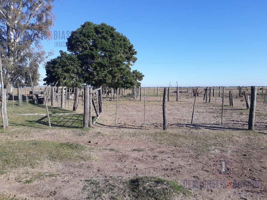 Foto Campo en Venta en  La Pelada,  Las Colonias  220 Ha La Pelada, Santa Fe