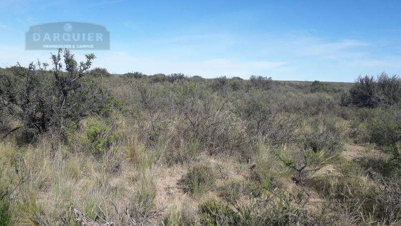 Foto Campo en Venta en  Limay Mahuida ,  La Pampa  6000 Ha. La Pampa