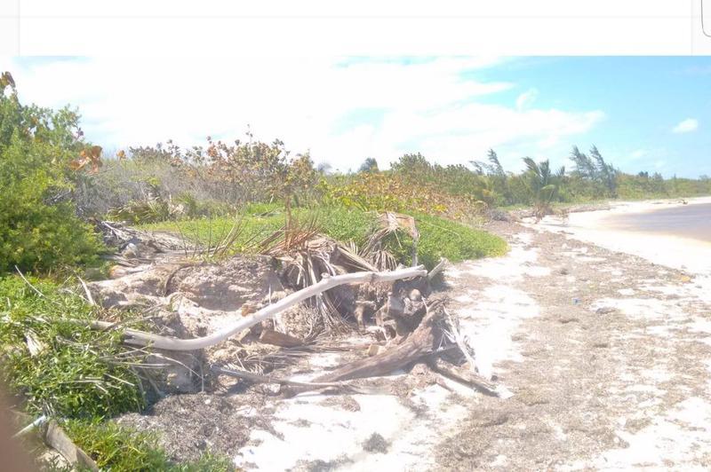 Foto Terreno en Venta en  Mahahual,  Othón P. Blanco  Venta de terreno en Mahahual