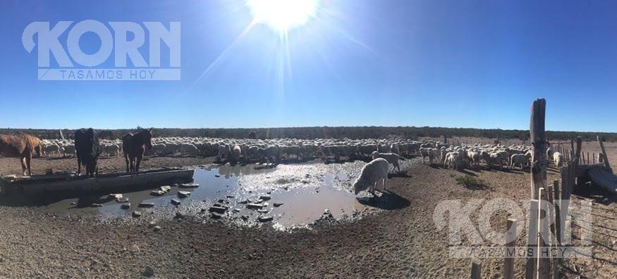 """Foto Campo en Venta en  Patagones ,  Interior Buenos Aires  """"El Jagüelito"""", Departamento El Cuy, Provincia de Río Negro."""