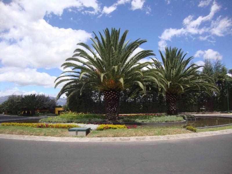 Foto Terreno en Venta en  Puembo,  Quito  Puembo Los Arrayanes