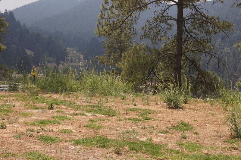Foto Terreno en Venta en  Cañada de Alférez,  Lerma  Cañada de Alferez, Ler. Edo. Mex. Hermoso Terreno boscoso con terrazas y hermosa vista