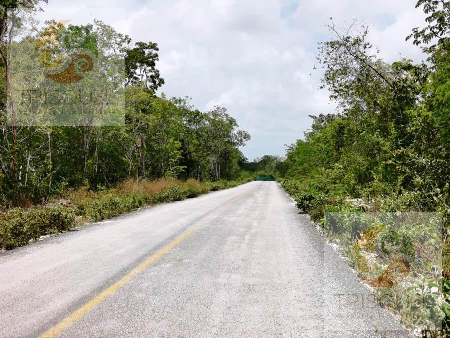 Foto Terreno en Venta en  Tulum,  Tulum  Terrenos en  Venta Rio Tulum, Quintana Roo