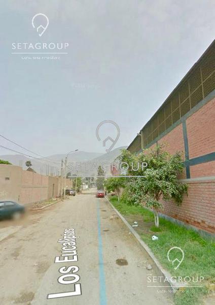 Foto Campo en Venta en  Puente Piedra,  Lima  Calle Los Eucaliptos