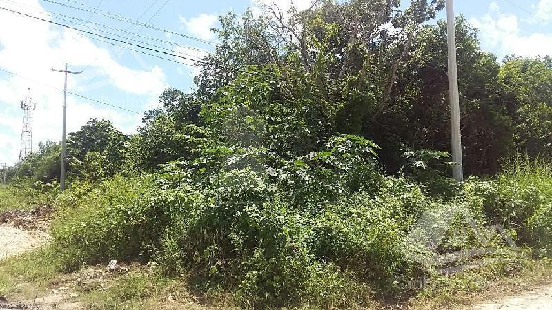 Foto Terreno en Venta en  Cancún ,  Quintana Roo  Terreno en Venta en Cancún/Av. Colegios