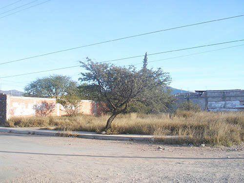 Foto Terreno en Venta |  en  Adolfo Lopez Mateos,  Tequisquiapan  Col. Adolfo López Mateos.