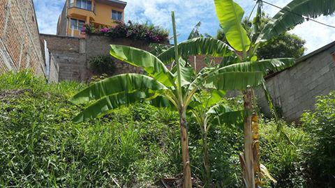 Foto Terreno en Venta en  Loma Linda Sur,  Distrito Central  TERRENO EN VENTA LOMA LINDA SUR TEGUCIGALPA HONDURAS