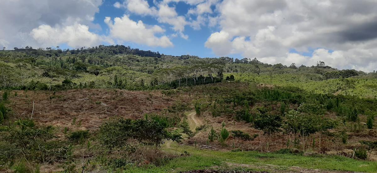 Foto Terreno en Venta en  Villa Rica,  Oxapampa  Villa Rica