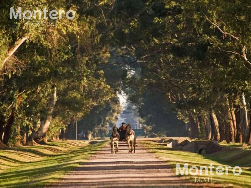 Foto Terreno en Venta en  Ezeiza,  Ezeiza  ESTANCIA VILLA MARIA