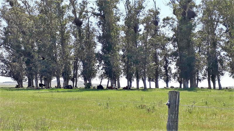 Foto Campo en Venta en  Pan de Azúcar ,  Maldonado  Ruta 9 Laguna del Sauce