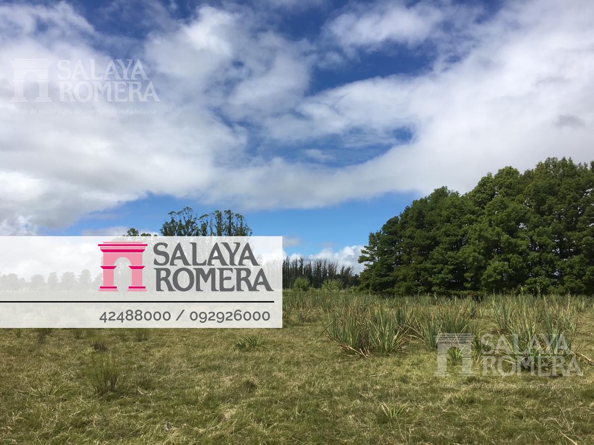 Foto Campo en Venta en  Lomo de la Ballena,  Punta Ballena  Campo en venta en Punta del Este sobre la Laguna del Sauce- 33 ha