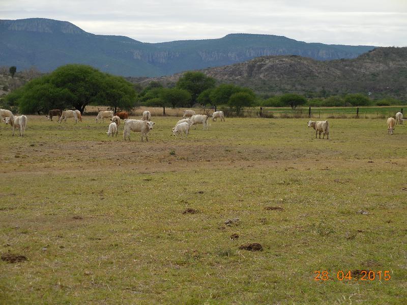 Foto Quinta en Venta en  Rancho o rancheria Tenanguillo,  Tabasco  MC VENDE RANCHO, Tabasco, Zac.