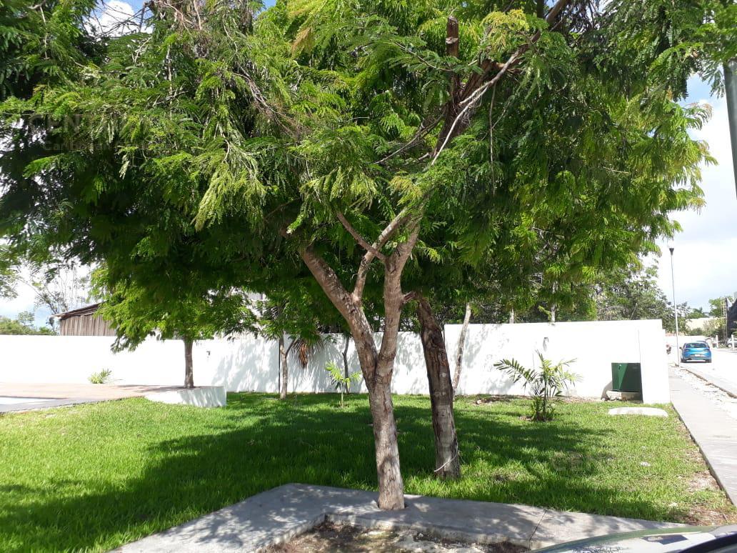 Playa del Carmen House for Sale scene image 43