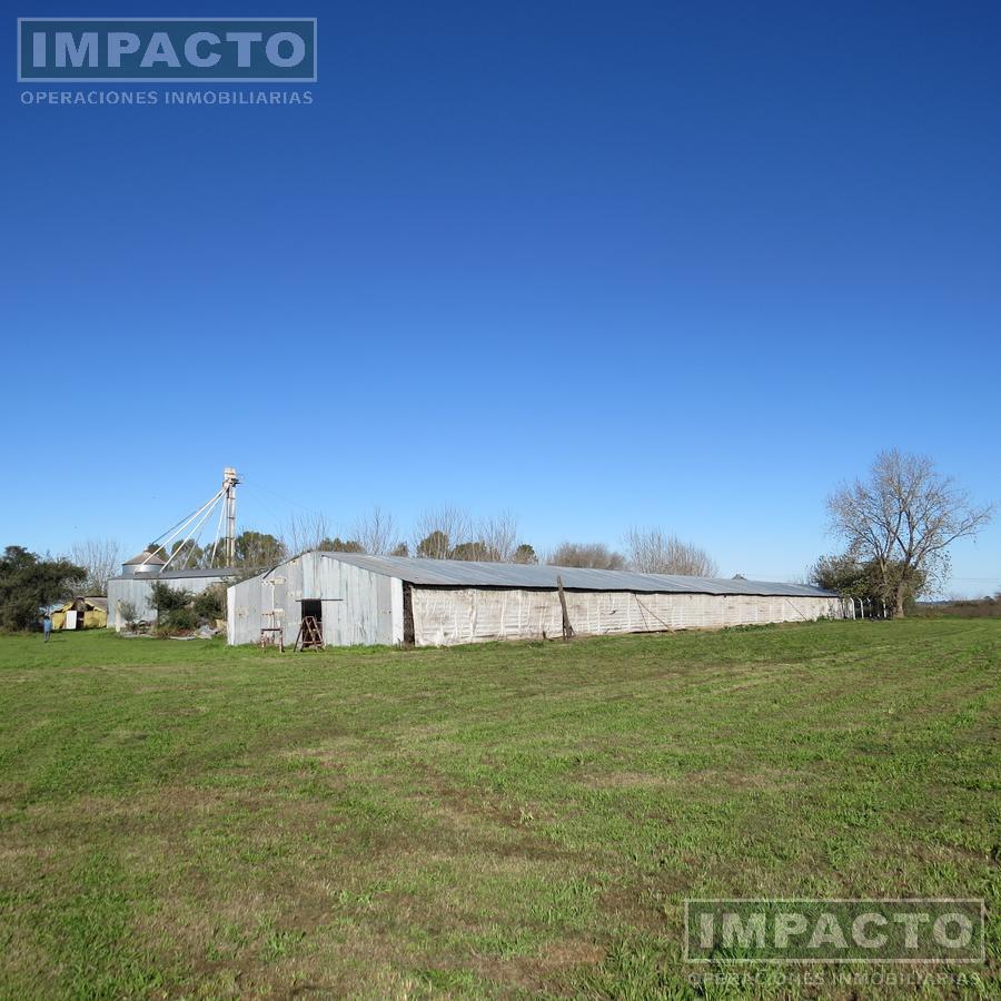 Foto Campo en Venta en  Berazategui ,  G.B.A. Zona Sur  Granja de gallinas ponedoras