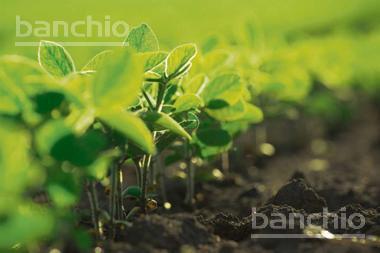 145 ha Agrícolas La Chispa, La Chispa, Santa Fe. Venta de División campos - Banchio Propiedades. Inmobiliaria en Rosario