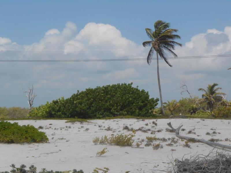 Mahahual Land for Sale scene image 11