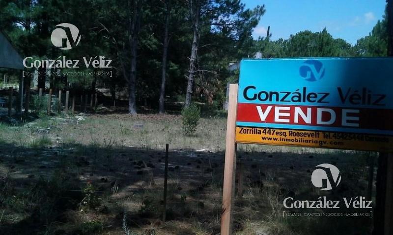 Foto Terreno en Venta en  Carmelo ,  Colonia  Zagarzazu-Ancla ent Marejada y Ballena