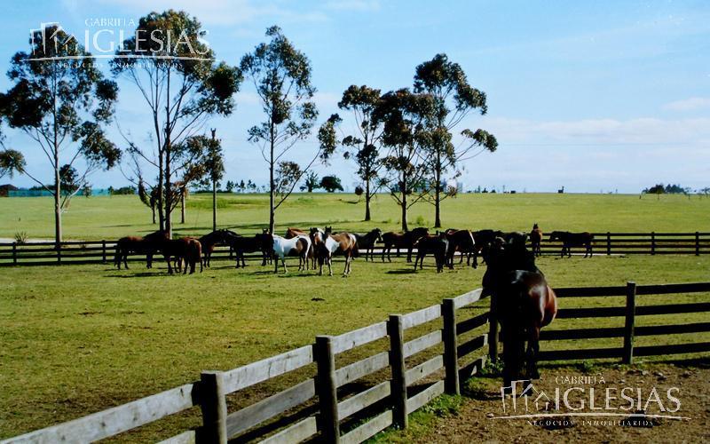 Casa en Venta  y Alquiler temporario  en Uruguay Maldonado La Barra