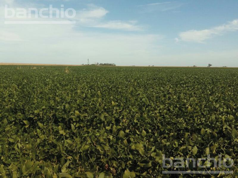 60 ha Agricolas Murphy, Murphy, Santa Fe. Venta de División campos - Banchio Propiedades. Inmobiliaria en Rosario